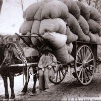 Carte postale: bourras de laine sur charrette. Porte-fainéant