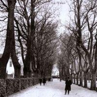Carte postale de Mazamet : les Promenades. A gauche, la Banque de France