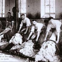 Carte postale: intérieur d'usine de peaux, enlèvement de la laine (le pelage)