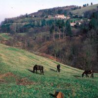 Chevaux près du château des Durands