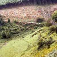 Vue plongeante sur moutons et forêt, route de Carcassonne