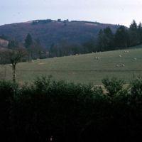 Troupeau de moutons dans la montagne, vers Le Colombier