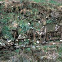 Wagonnets recouverts par la terre et la végétation