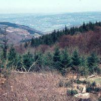 Ruines du Fustié : du Fustié, vue vers le nord