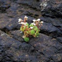 Fleurs poussant sur le rocher